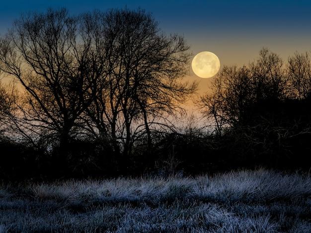 키 큰 나무의 실루엣과 황금 하늘에 큰 보름달, 겨울의 추위에서 땅을 얼어 붙은 밤 풍경. 스페인.