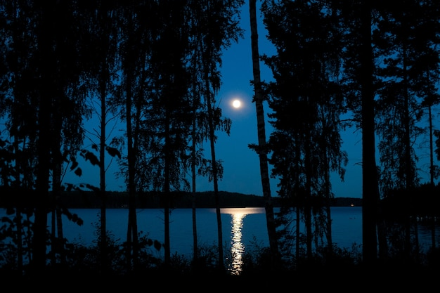 Night landscape of a forest lake with moonbeam reflection in the water