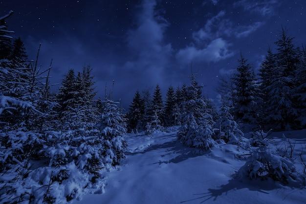 겨울 숲의 밤 풍경