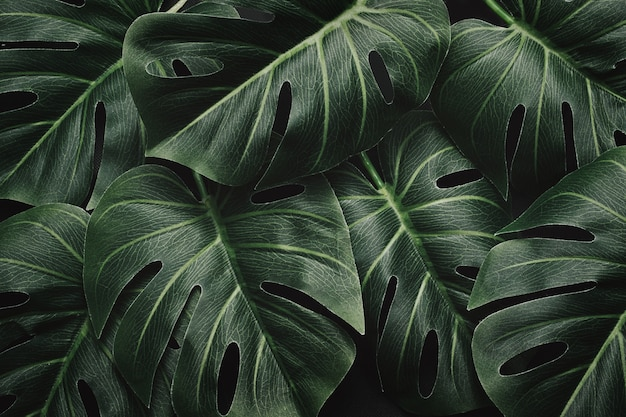Night mystical dramatic jungle and monstera leaves and layout pattern in tropical moody forest