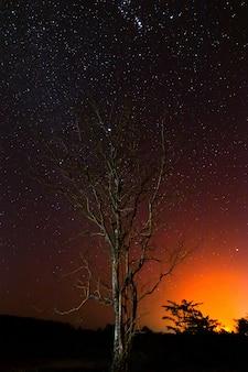 Night photos, dry dead trees