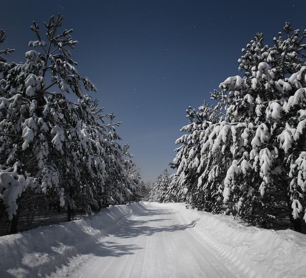 冬の森を抜ける夜道