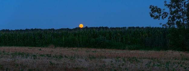 달이 있는 들판의 밤하늘. 옥수수 밭 위에 보름달입니다. 파노라마 배경입니다.
