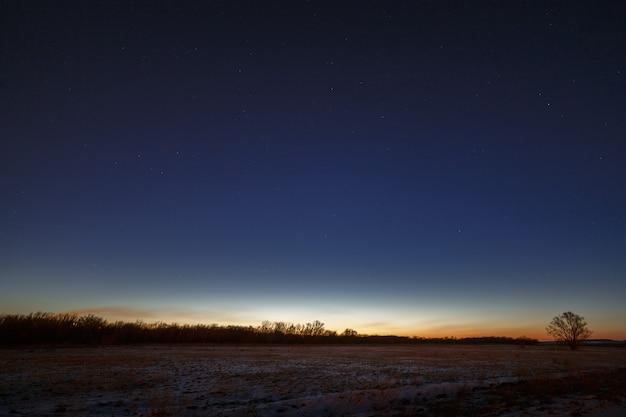 Ночное небо со звездами. дерево на фоне утренней зари.