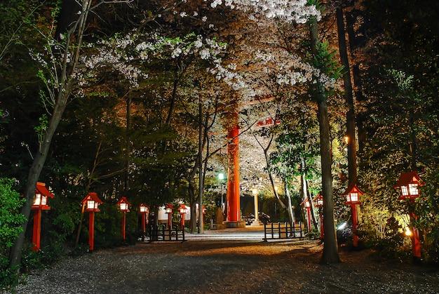 Ночная точка зрения красивого вишневого цвета в городском парке в японии. гунма-кен