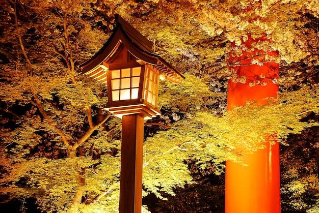 Ночная точка зрения красивого вишневого цвета в городском парке в японии.