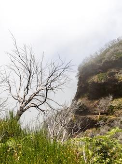 Кошмарные деревья