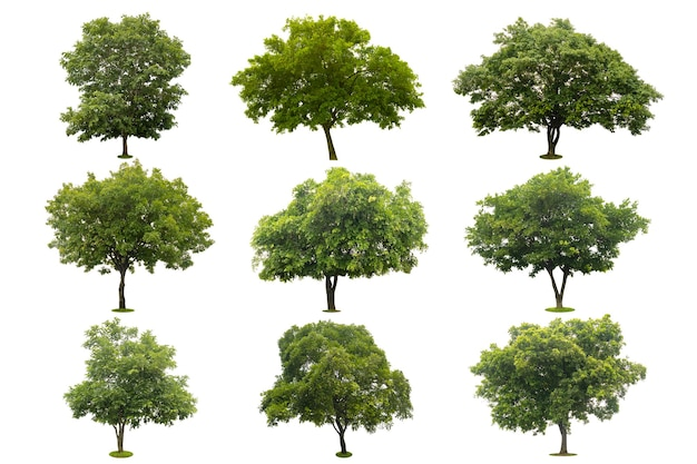 クリッピングパスで白に分離された美しい緑の木の9つのコレクション