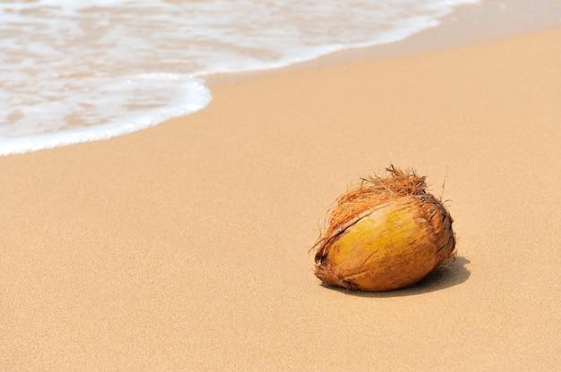 Никто не кокос на тропическом пляже океана