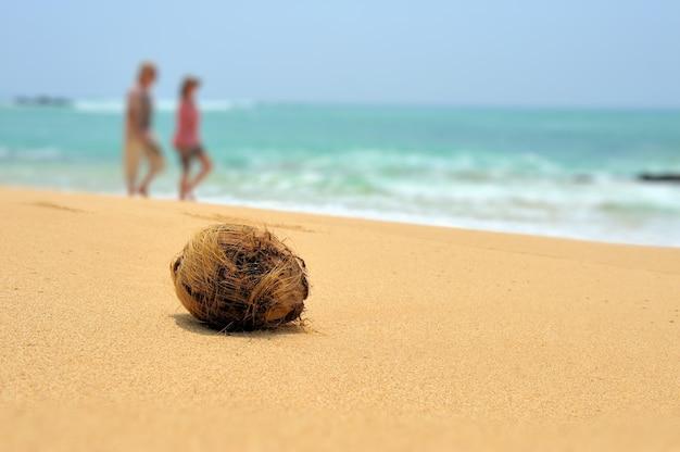 熱帯の島のビーチの海にココナッツはいない