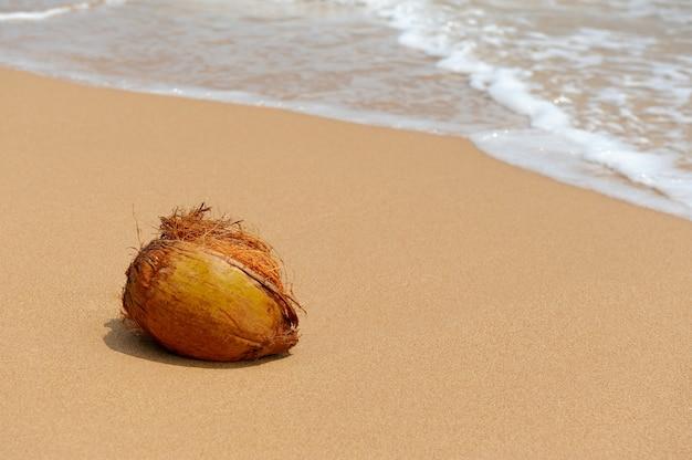 熱帯の島のビーチの海には誰もココナッツがいない