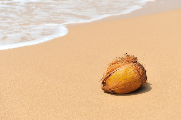 Nobody coconut on tropical beach ocean