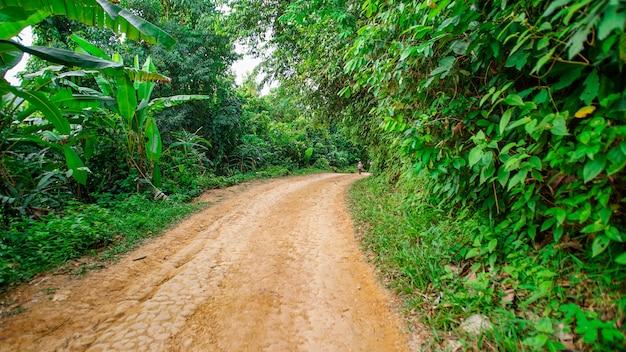 Non asphalt road with many trees