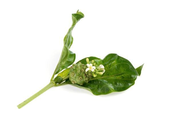Noni and flowers on green leaves and isolated on white background.