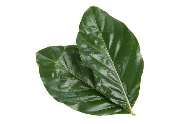 Зеленые листья нони, изолированные на белом фоне. вид сверху, плоская планировка.