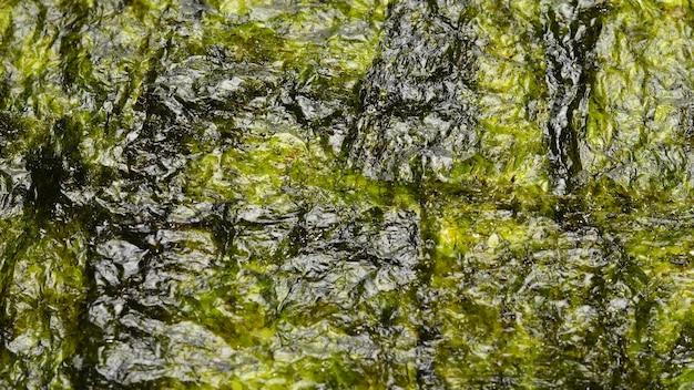 Nori seaweed isolated on white
