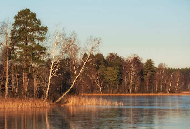 Northern forest on the shore of a frozen lake in the early spring on a sunny day
