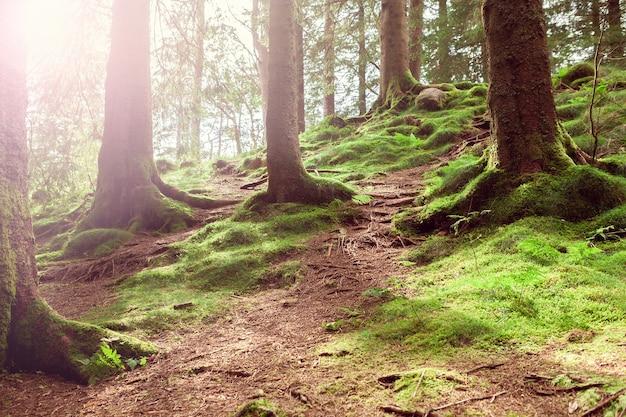 ノルウェーの緑の苔のある北部の森