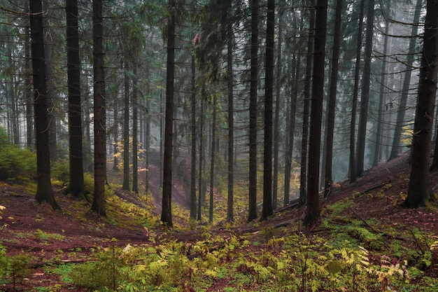 Northern hilly mystical forest in autumn evening