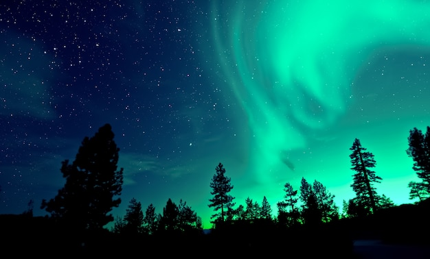 Northern lights aurora borealis over trees