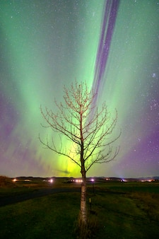 Northern lights aurora in iceland above the tree