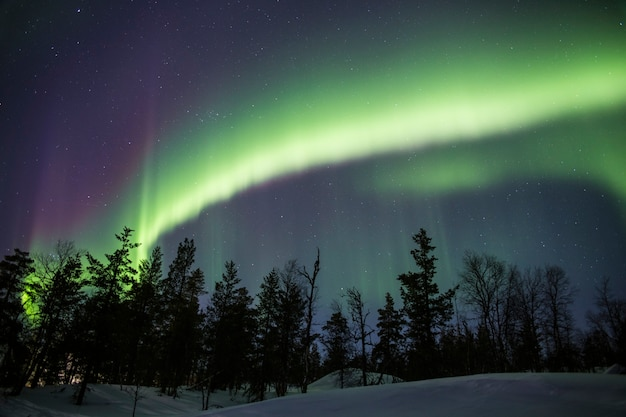 Northern lights cover the whole sky behind a snowy forest