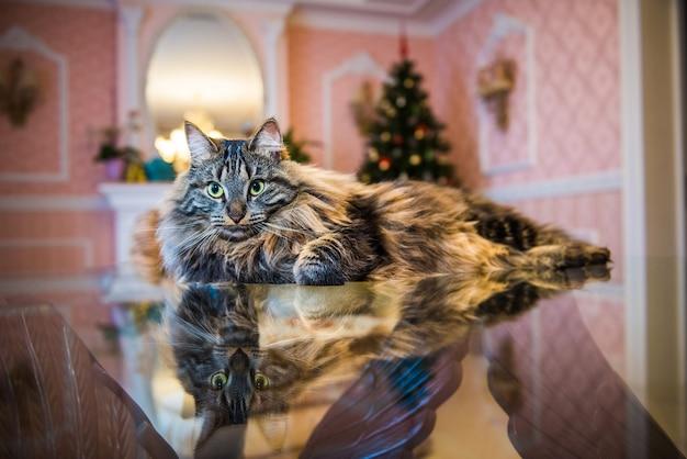 Портрет норвежской лесной кошки с большой пушистой мордочкой в интерьере дома на рождество