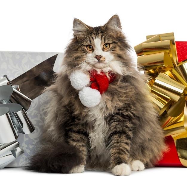 クリスマスのスカーフを身に着けているノルウェーの森の猫