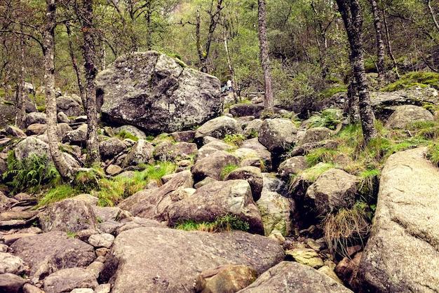 岩、木、緑の草のあるノルウェーの山々