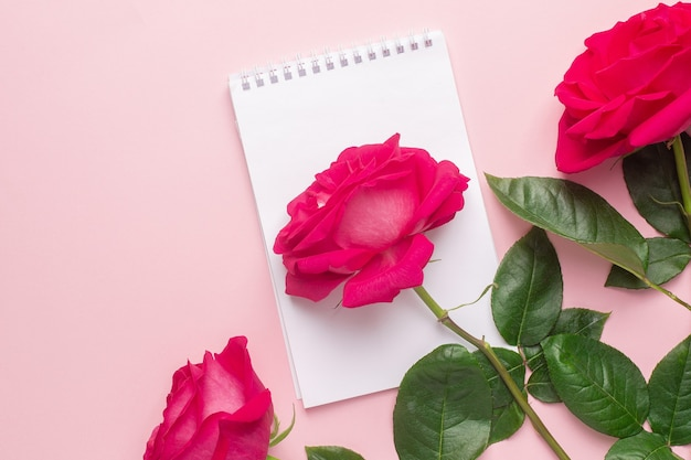 노트북과 진한 분홍색 장미 분홍색 평면도에