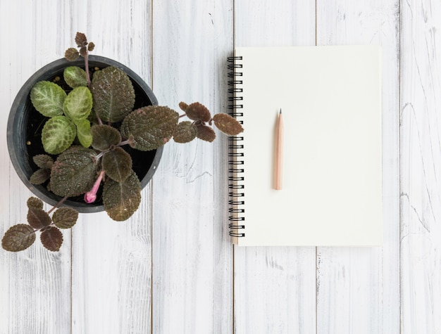 Notebook, brown pencil and plantpot on white wooden table