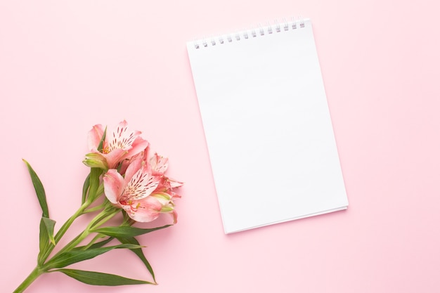 Notebook and flower alstroemeria on a pink