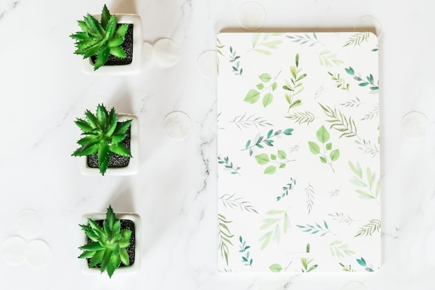 Notebook and succulent plants, top view flat lay.