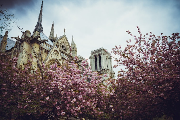 Notre dame in the spring against the background of apple blossom