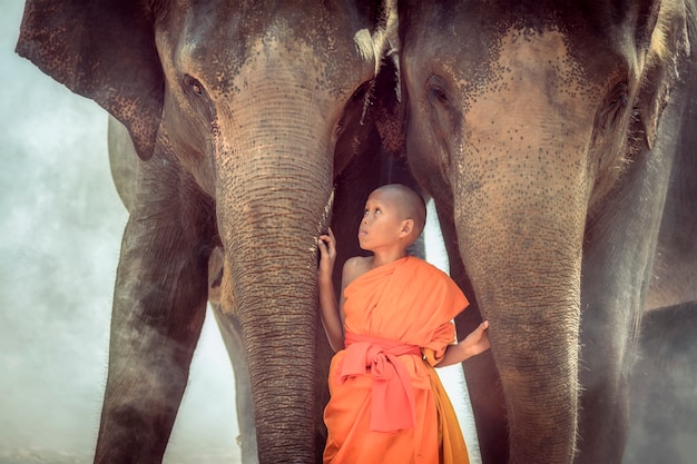 Novices are playing with two elephants.
