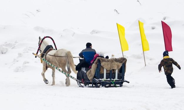 Novocheboksarsk, 러시아-2021 년 2 월 27 일. 겨울에는 썰매를 타는 백마, 휴일에는 러시아에서 승마를합니다.