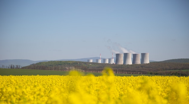 Дымоходы атомной или тепловой электростанции с полем желтого рапса перед ними.