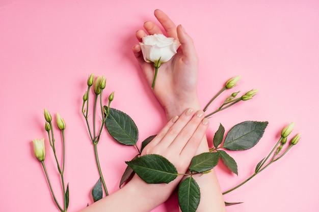 ヌードマニキュア。自然な鮮度と若い女の子の手、白いバラの花の抽出物を使用したハンド化粧品、製品。花と葉のあるファッション女性の手、ハーブスキンケアピンクの背景スタジオショット