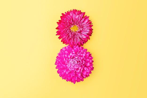Номер 8 из лепестков розовых цветов астры на желтом фоне. плоская композиция из весенних цветов. творческий узор, вид сверху, копия пространства. 8 марта фон
