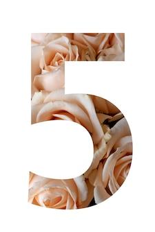 흰 벽에 다섯 번째 장미 꽃,