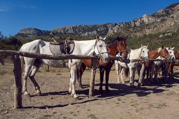 夏にクリミア半島の山に乗る観光客に縛られている馬の数