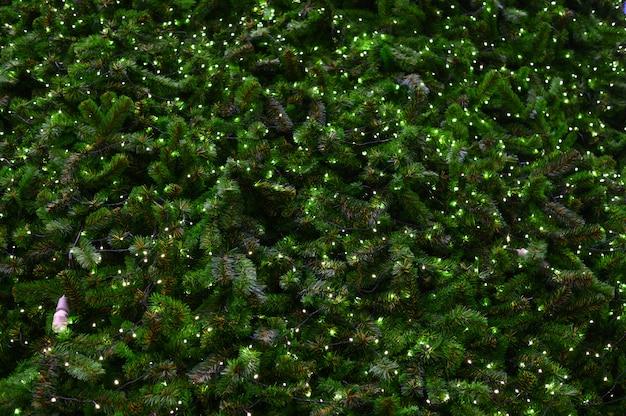 Numerous light bulbs adorning the pine trees.