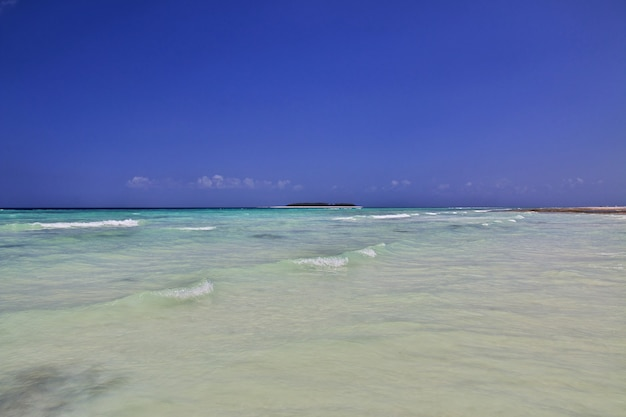 タンザニアのザンジバル島のヌングイビーチ