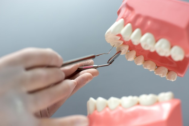 Медсестра практикует макет челюсти с зубами