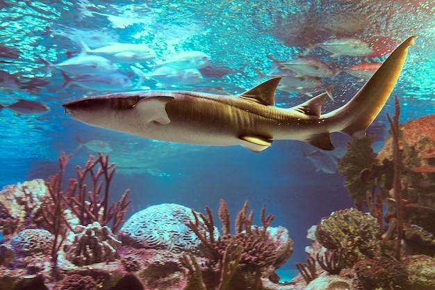 간호사 상어는 서 대서양과 동 태평양의 따뜻하고 얕은 바다의 해저 근처에 거주하는 것을 선호합니다.