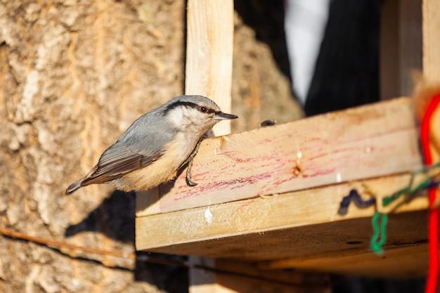 Поползень на деревянной кормушке для птиц