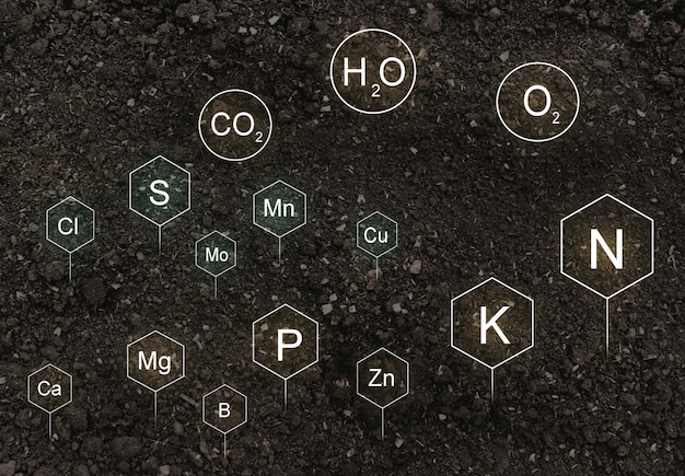 Nutrients in the life of plants found in the soil.