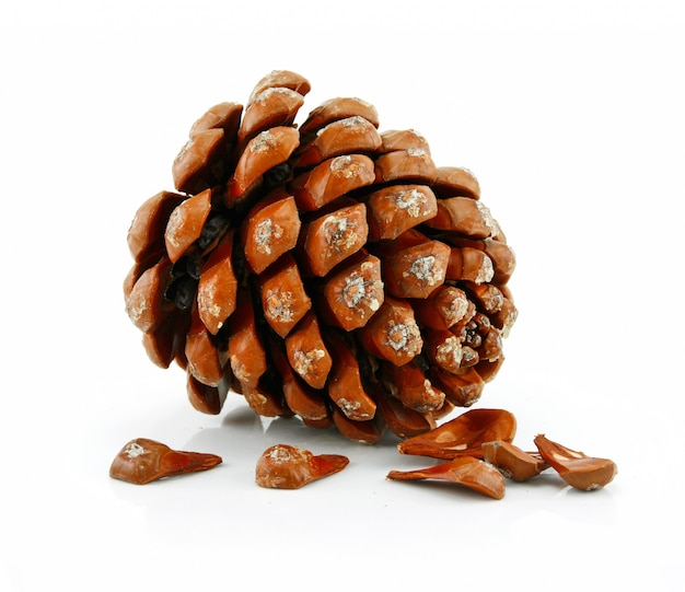 Nuts and cone of siberian pine isolated on white
