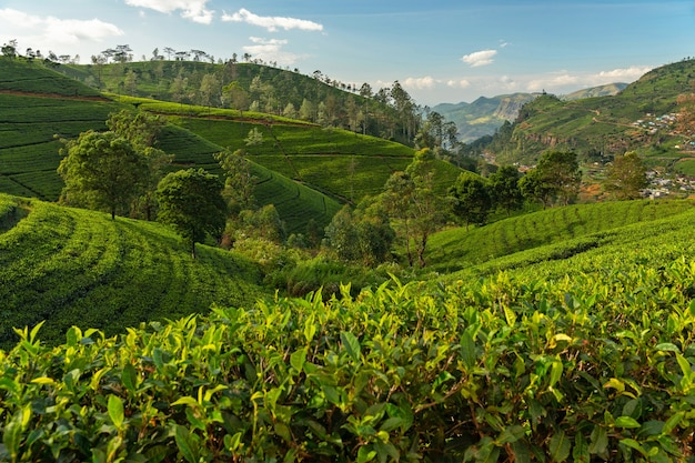 ヌワラエリヤ緑茶農園の地形。