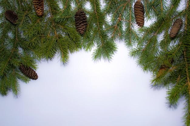 Новый год рождественский праздник концепция подарочная карта натуральный каркас зеленые еловые ветки с коричневыми шишками на белом фоне.
